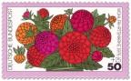 Stamp: Blume: rote Zinnien
