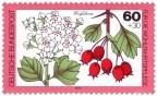 Stamp: Weissdorn Blatt und Frucht