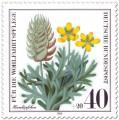 Stamp: Hornköpfchen (Wildkraut)