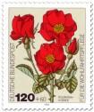 Stamp: Rote Rosen: Polyantha-Hybride