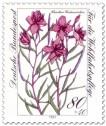Stamp: Fleischers Weidenröschen