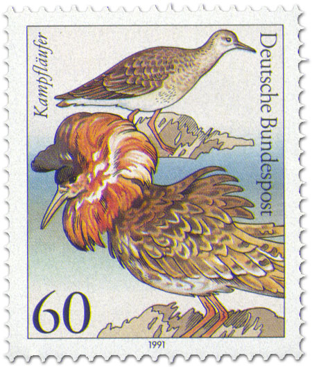 Stamp: Kampfläufer (Seevogel)