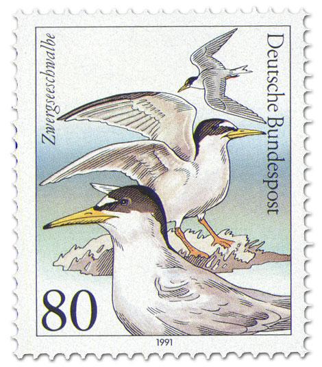 Stamp: Zwergseeschwalbe